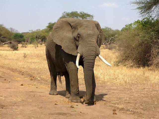 Afrika photo